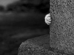 #cat's paw
