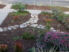 yard where no grass grows/alternatives | Now I am looking forward to next spring, when most of those divided ...