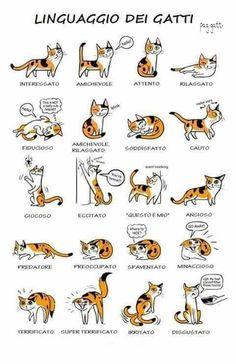 Gatti e il loro linguaggio cats pinterest search for Il linguaggio dei gatti