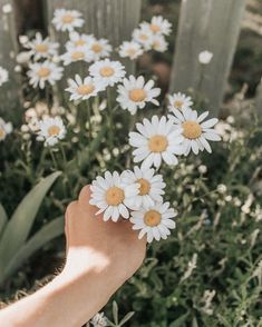 i admire you for your strength, the love you give + share, for just being you, mom — i love you 💗 No Rain, Flower Aesthetic, Aesthetic Pictures, My Flower, Aesthetic Wallpapers, Planting Flowers, Beautiful Flowers, Nature Photography, Daisy