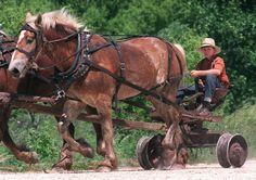 An Amish boy drives horse-drawn farm equipment near Hazleton, Iowa.