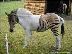 Zorse: Zebra and Horse Mix