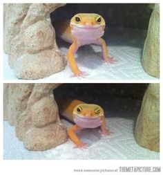 Photogenic Lizard…