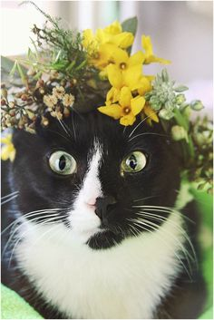 worcester county humane society cats wearing flower crowns // up for adoption! // little miss lovely floral design