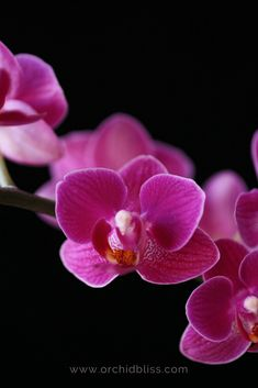 It's your turn to learn how to grow orchids. Here's a list of the top 25 easiest to grow orchids. Tall Indoor Plants, Indoor Orchids, Orchid Plants, Outdoor Plants, Orchid Flowers, Indoor Garden, Garden Plants, Herb Garden, Vegetable Garden