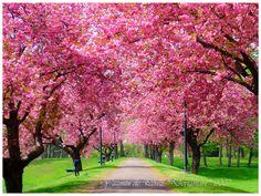 Trees at Springtime. Learn more about Hope for Javier: hopeforjavier.org