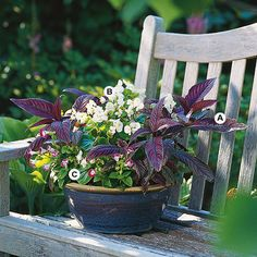 Container Gardens: Keep in mind that containers can do double-duty. Here, a combination of low-growing plants works perfectly as a centerpiece for a party or as an accent on a wall, bench, table, or other structure. It grows best in shade.   A. Persian shield (Strobilanthes dyerianus) -- 2   B. Begonia 'Cocktail Vodka' -- 2   C. Wishbone flower (Torenia 'Clown Mix') -- 3