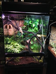 Is a pet crested gecko in your future? Learn everything you need about crested gecko terrarium size and the pros/cons of cohabitation at ReptiFiles! Terrariums Gecko, Bartagamen Terrarium, Fish Tank Terrarium, Terrarium Reptile, Chameleon Terrarium, Turtle Terrarium, Terrarium Centerpiece, Hanging Terrarium, Terrarium Necklace