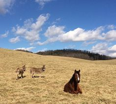 Weekly Instagram Round-Up  In which dogs, cats and donkeys all try to get in on the HN fun.