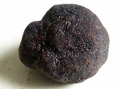 Today is National Truffles Day. Here's the lowdown on this expensive delicacy. A truffle is the fruit of a tuber like fungus which. Garden Mushrooms, Growing Mushrooms, Wild Mushrooms, Stuffed Mushrooms, Edible Mushrooms, Portobello, Growing Truffles, Shiitake, Slime Mould
