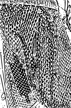 """Check out """"Net"""". #AdobeShape"""