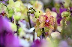 Noch blüht die Orchidee. Doch was tun mit den Stängeln nach der Blüte? Foto: dpa