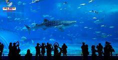 La ciudad de Nagoya, además de recibir el parque de Lego, también tendrá un nuevo acuario. Más información.