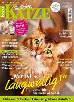 😻 Mir ist so langweilig: Tipps und Tricks für mehr #Aktivität #Katze #Spielen #Haustier  Jetzt in Geliebte Katze, Ausgabe 10/2016.