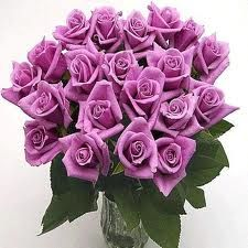 Lavender roses: meaning love at first sight & enchantment