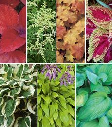 Brightside Shade Garden14 plants
