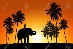 20184175-realistic-black-silhouette-of-asian-elephant-with-the-rider-among-coconut-trees-on-tropical-sunset-b-Stock-Photo.jpg (1300×866)