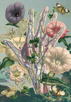 Juan Gatti Ciencias Naturales anatomy collages