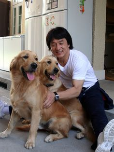 Jackie Chan with two goldens. #dogs #pets #GoldenRetrievers Facebook.com/sodoggonefunny