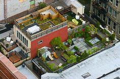 plants-rooftop-gardens-photo.jpg (700×466)