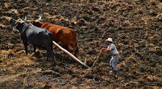 Labrando la Tierra en Huehuetenango - Foto de Waldo López
