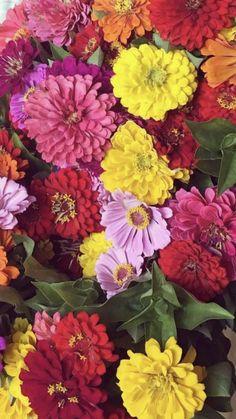 Wholesale Flowers And Supplies, Flowers Wholesale, Flower Delivery, My Flower, Fresh Flowers, Wedding Flowers, Public, Plants, Plant