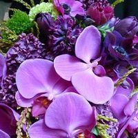 Blumenwahl-Wicken