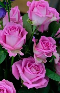 ideas flowers pink wallpaper rose wallpapers for 2019 Beautiful Rose Flowers, Amazing Flowers, Love Flowers, Paper Flowers, Flower Pattern Design, Flower Wallpaper, Pink Wallpaper, Morning Flowers, Wedding Flower Arrangements
