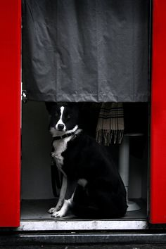 #dog in a photo cell  Like,Repin,Share, Thanks!