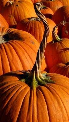 Pumpkin Patch, love the long twisty stem