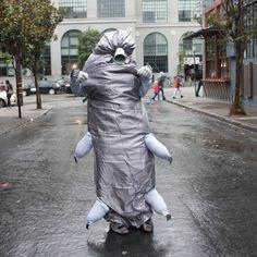 tardigrade - Yahoo Image Search Results