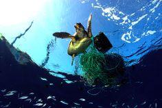 Proteger os Oceanos? Tem que Ser da Nossa Natureza! - Programa Território Animal