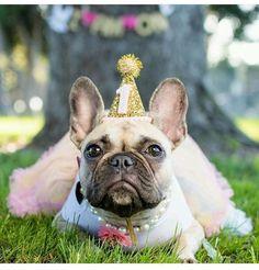 Dog Party Hat Animal Hat Birthday Hat by BustersPartyShop on Etsy Dog Birthday Hat, Dog First Birthday, Puppy Birthday Parties, Puppy Party, Animal Birthday, Birthday Celebration, Happy Birthday, Gold Birthday, Dog Ages
