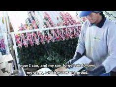 Calidad Rosas ecuatorianas, al mundo, a nuestros corazones, ESPOL, 2012.04.12. - YouTube