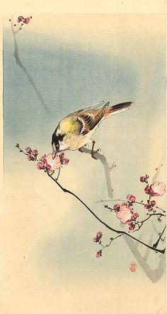 """Songbird on plum blossom"" by Ohara Koson"
