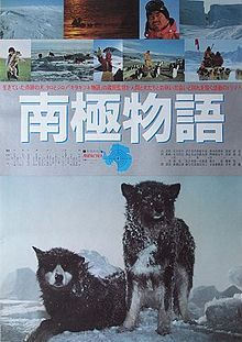 eight of the fifteen sled dogs managed to break loose from their chains (Riki, Anko, Shiro, Jakku, Deri, Kuma, Taro, and Jiro), but the other seven were not so fortunate. Eleven months later, on 14 January 1959, Kitagawa the first expedition, returned .     * 7 dogs were found dead at the base still chained: Goro, Pesu, Moku, Aka, Kuro, Pochi, Kuma (monbetsu)        * 6 dogs got loose and disappeared: Riki, Anko, Shiro, Jakku, Deri, Kuma (furen)         2 survivors left: Taro and Jiro
