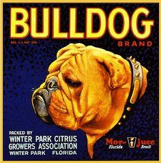 Winter Park FL Bulldog Dog Orange Crate Label Art Print | eBay