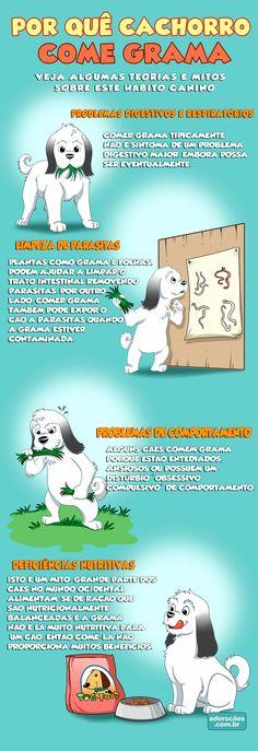 Por-quê-Cachorro-Come-Grama-infografico