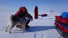 Missing Dutch skiers' dog Kimnik found alive in High Arctic | CBCNews.ca Mobile