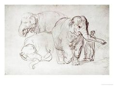 The most famous and wonderfull drawings with animals as a theme. From dogs to cats to elephants and other wild animals. Drawn by famous artists like Rembrandt and Leonardo Da Vinci. Rembrandt Drawings, Rembrandt Paintings, Animal Sketches, Animal Drawings, Cool Drawings, Elephant Poster, Elephant Art, Albertina Wien, Alberto Giacometti