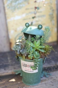 Which succulent plants do you like best for your house in 2016 New Year? - Fashion Blog