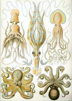 Ernst Haeckel - Artforms of Nature -