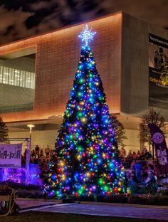 Christmas tree in Curtis Hixon Park, Tampa, Florida
