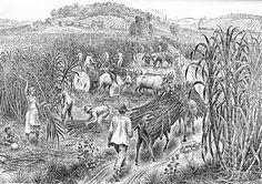 """veitcatar: """" """"Percy Lau (Arequipa, Peru 1903 - Rio de Janeiro RJ 1972) foi desenhista, ilustrador, gravador e pintor. Em 1921, transfere-se para Olinda, Pernambuco, onde é um dos fundadores do Movimento de Arte Moderna do Recife. O aspecto documental..."""