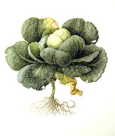 Cabbage by Christine Stephenson