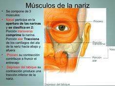Musculos de cara y craneo