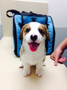 """""""HELLO, IT'S VERY NICE TO MEET YOU. I'M REPORTING FOR DUTY."""" 