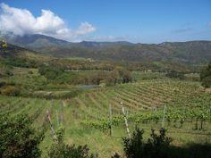 More about Castelbuono in Sicilia