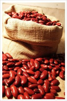 RED KIDNEY BEANS, HOW TO GROW THEM FROM DRIED SEED
