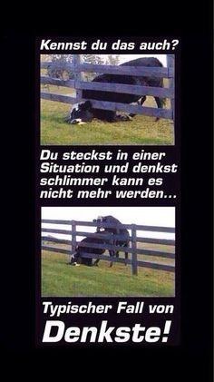 (4) Schwarzer Humor - Sarkasmus Pur 2.0